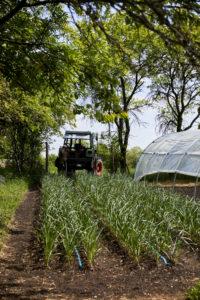 Bauerngarten im Mai 2020